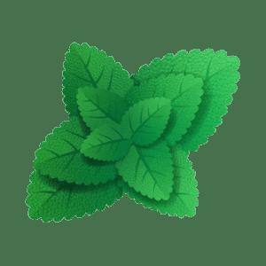 foglie di menta su sfondo bianco 100011 174