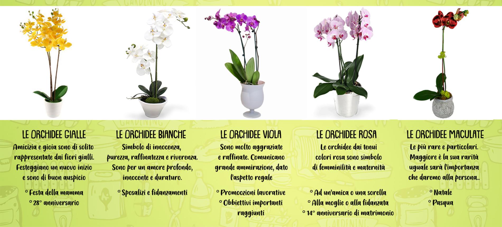 Orchidea: fiore del nord Europa Arredamento Garden