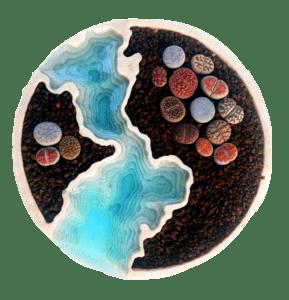 Piante grasse: dame delle dune Arredamento