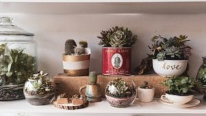 The Best Indoor Succulents for Minimal Care Maximum Beauty