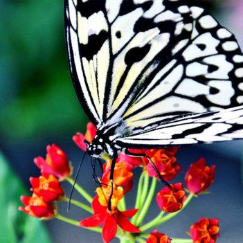 bw_butterfly_wings_1600.jpg_2