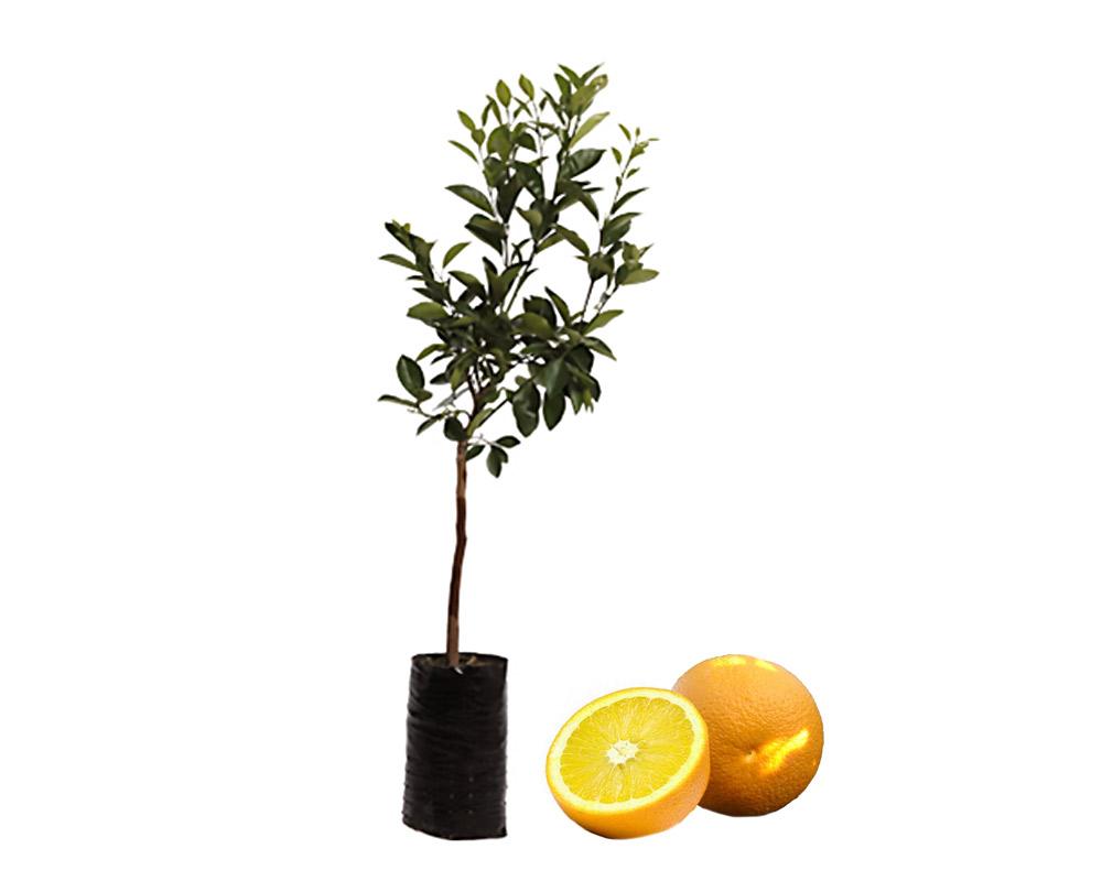 arancio vaniglia fitocella