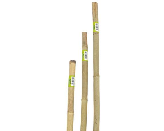 Canne Bamboo Naturali 150h Cm Ø22/24 Mm