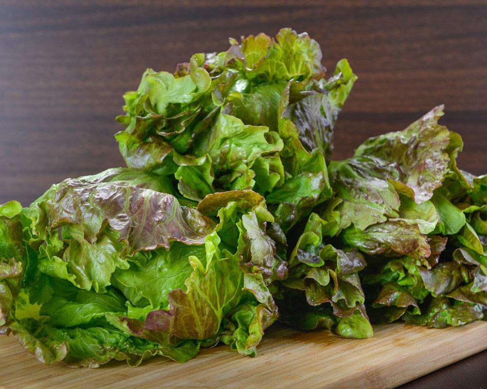 lattuga canasta ortaggio sementi dotto orto biologico bulbi e sementi giardinaggioi 1
