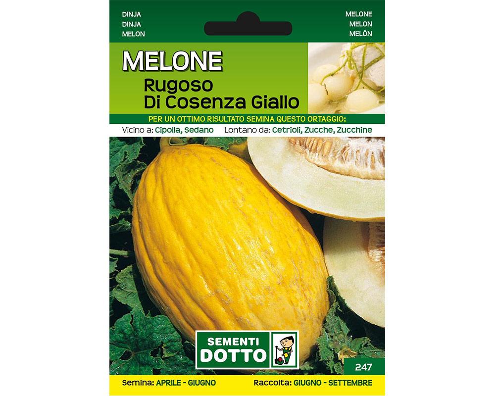 melone rugoso di cosenza giallo ortaggio sementi dotto orto biologico bulbi e sementi giardinaggioi 1.jpg2  1