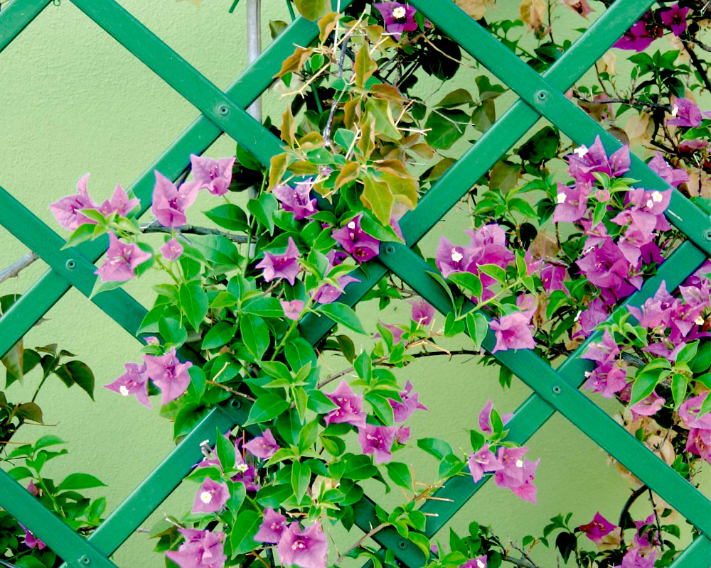 traliccio pvc verde 200x100 cm verdemax estendibili tralicci giardinaggio 1.jpg3  1