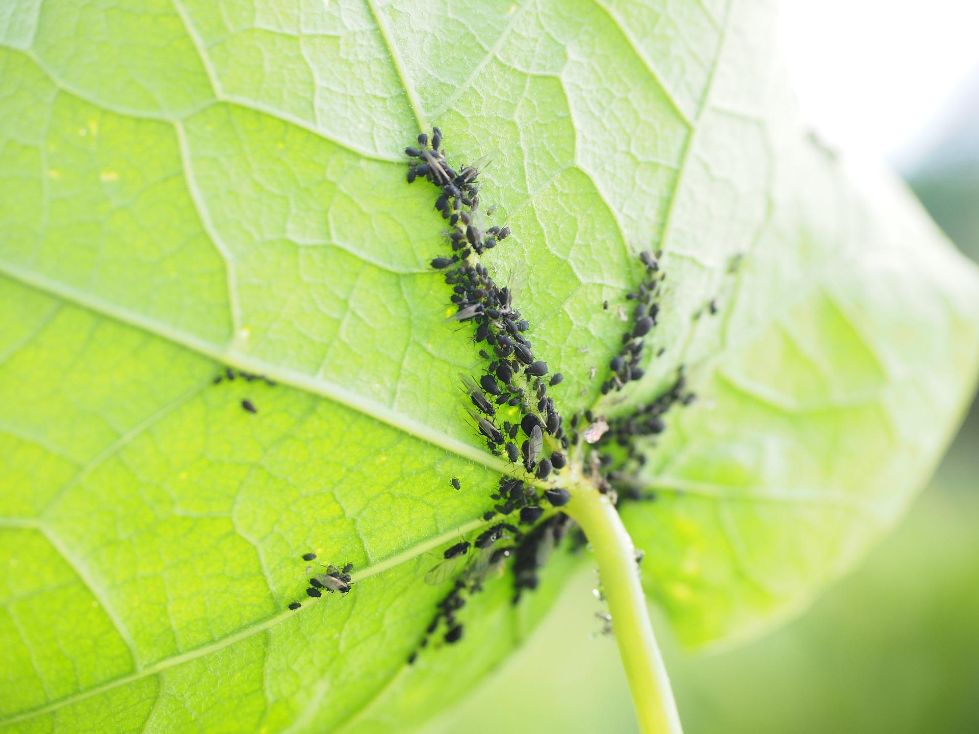 eliminare i parassiti in giardino