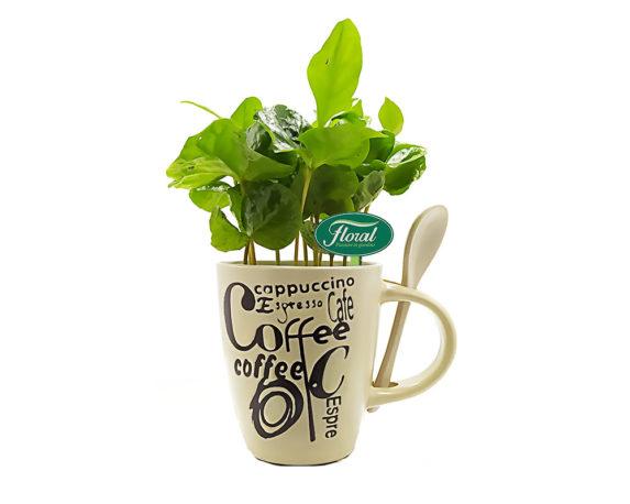 Coffea Arabica Decopot Coffee-cup H18